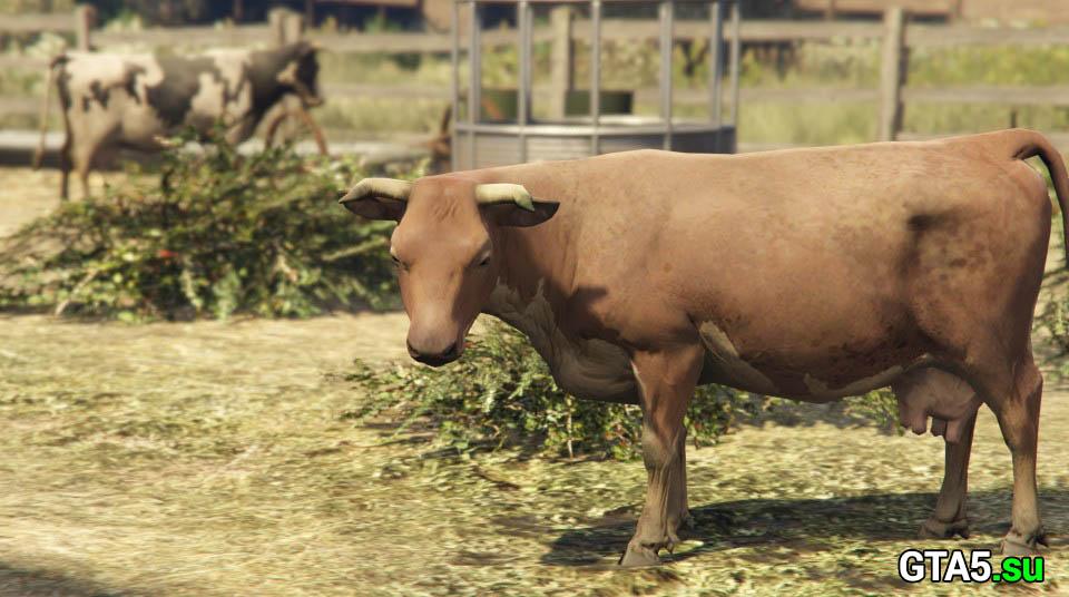Скот на ферме