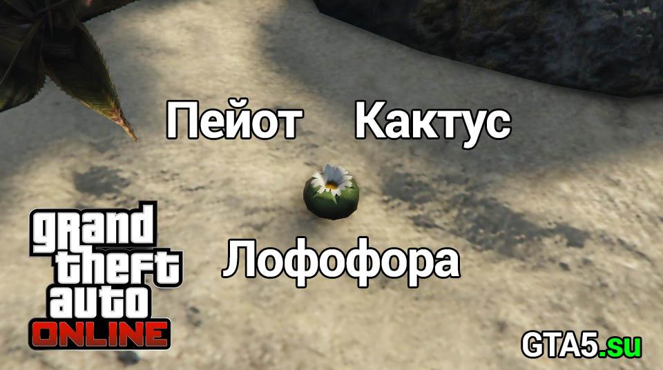 Кактус Пейот